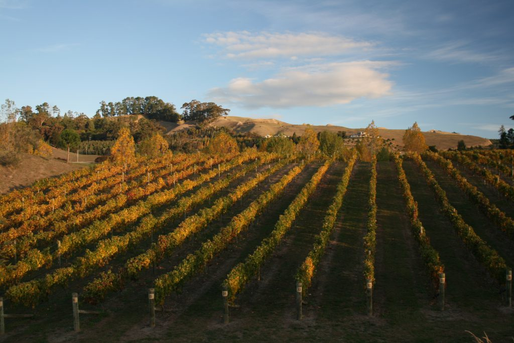 HB_Vineyard_autumn